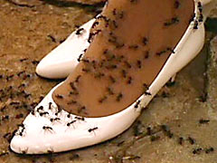 Ants bite till death