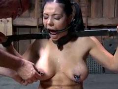 Tortured bitch